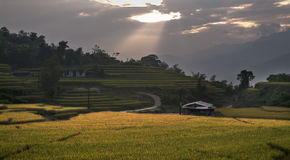Risfält på gryningen som är nordvästlig av Vietnam Arkivfoto