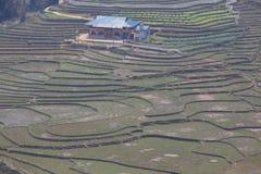 risfält på SAPA Vietnam Arkivfoto