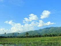 Risfält på SIGI-regenskap, Indonesien arkivbilder