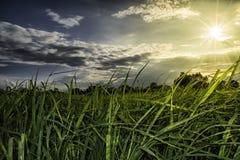 Risfält på solnedgångtid med signalljusljus Arkivfoto