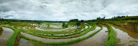 Risfält på terrass i Bali Indonesien Royaltyfri Fotografi
