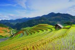 Risfält på terrass i regnig säsong på Mu Cang Chai, Yen Bai, Vietnam royaltyfria foton