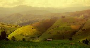 Risfält på terrasserade landskap blå sky royaltyfri bild