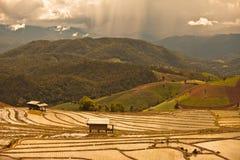 Risfält på terrasserat Royaltyfri Bild