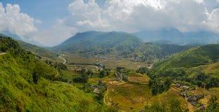 Risfält på terrasserat Royaltyfria Bilder