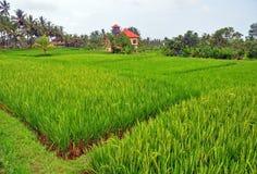 Risfält som terrasseras på av Bali Royaltyfri Bild
