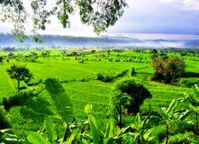 Risfält som terrasseras på av Bali Royaltyfri Fotografi
