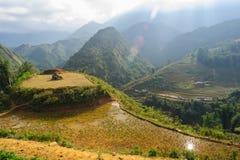 Risfält som terrasseras på av Cat Cat Village, Vietnam Royaltyfri Fotografi