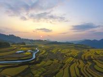 Risfält som terrasseras på i morgonen Royaltyfri Fotografi
