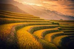 Risfält som terrasseras på med träpaviljongen på solnedgången i Mu kan Royaltyfri Foto