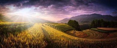 Risfält som terrasseras på med träpaviljongen på solnedgången i Mu kan Arkivfoto