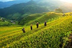 Risfält terrasserade av Mu Cang Chai, Vietnam Royaltyfri Fotografi