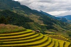 Risfält terrasserade på av Mu Cang Chai, YenBai Royaltyfria Bilder