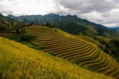 Risfält terrasserade på av Mu Cang Chai, YenBai royaltyfri foto