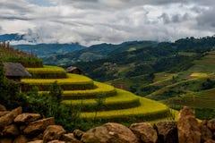 Risfält terrasserade på av Mu Cang Chai, YenBai royaltyfri fotografi