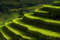 Risfält terrasserade på av Mu Cang Chai, YenBai, Vietnam, Vietnam landskap arkivbilder