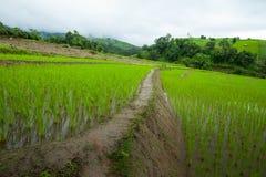 Risfält terrasserade på av Mu Cang Chai, YenBai, Vietnam Ris f Royaltyfri Foto