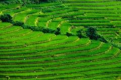 Risfält terrasserade på av Mu Cang Chai, YenBai, Vietnam Ris f Arkivfoto