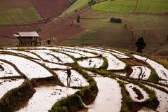 Risfält terrasserade på av Mu Cang Chai, YenBai, Vietnam Ris f Arkivfoton