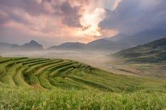 Risfält terrasserade på av Mu-cang chai, YenBai, Vietnam Ris fi Arkivfoton