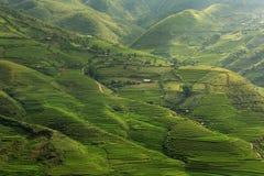 Risfält terrasserade på av Tu Le, YenBai, Vietnam Arkivbild