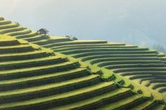 Risfält terrasserade på i rainny säsong på Mu Cang Chai, Yen Ba Fotografering för Bildbyråer