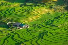 Risfält terrasserade på i rainny säsong på SAPA, Lao Cai, Vietnam Arkivfoton