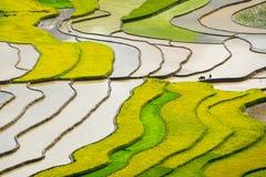 Risfält terrasserade på i rainny seasont på TU LE By, Yen Bai, Vietnam Arkivfoto