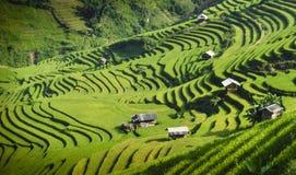 Risfält terrasserade på i solnedgång på Mu Cang Chai, Yen Bai, Vietnam Arkivbild