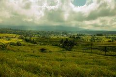 Risfält världsarv, Bali Indonesien Arkivbild