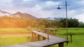 Risfältet och trä går vägen med bergbakgrund royaltyfri fotografi
