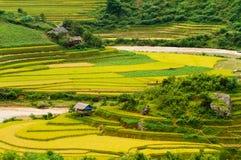 Risfältfält Arkivfoto