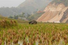 Risfältfält i Sapa Vietnam Royaltyfria Bilder