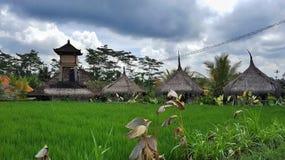 Risfältfält med halmtäckte kojor, Ubud område, Bali Royaltyfri Bild