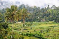 Risfältfält och by - Kandy till den Ella drevresan - Sri Lanka arkivfoto