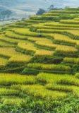 Risfältterrasser i Vietnam Arkivbild