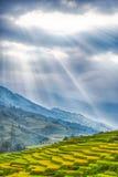 Risfältterrasser med ursnygg blå himmel Arkivfoton