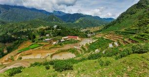 Risfältterrasser Nära Sapa Vietnam Arkivbilder