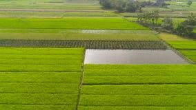 Risf?lt och jordbruks- land i indonesia stock video