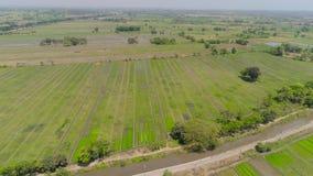 Risf?lt och jordbruks- land i indonesia lager videofilmer