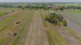 Risf?lt och jordbruks- land i indonesia arkivfilmer