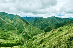 Risfältterrassen sätter in Filippinerna Royaltyfria Foton