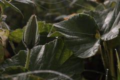 Risfors; risplanta; bedder; planta royaltyfri fotografi
