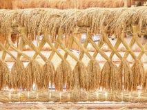 Risfrö Paddy Rice guld- rice Arkivfoto