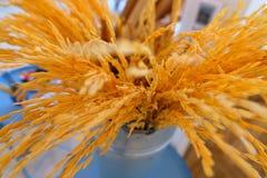 Risgrov spik av thailändska jasminris royaltyfri bild