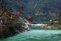 RISHIKESH, INDIA - view to Ganga river and lakshman jhula from cafe under magnolia tree Stock Photos