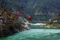 RISHIKESH INDIEN - sikt till den Ganga floden och lakshmanjhula från kafét under magnoliaträd Arkivfoton