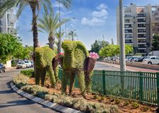 Set of two decorative green topiary Arabian camels with baskets. Rishon LeZion, Israel-June 17, 2017: Caravan of two green topiary Arabian camels with baskets Royalty Free Stock Photography