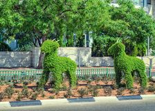 Two decorative figures of topiary goats following each other. Rishon LeZion, Israel-June 17, 2017: The set of two green bush topiary figures of goats running one Royalty Free Stock Photos