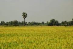 Risi degli agricoltori Fotografia Stock